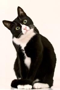 RF getty cat
