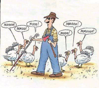 happy_thanksgiving_MooingTurkeys