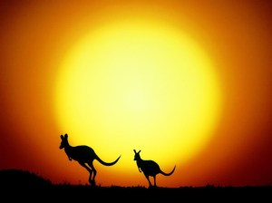 sunset-with-australian-kangaroos