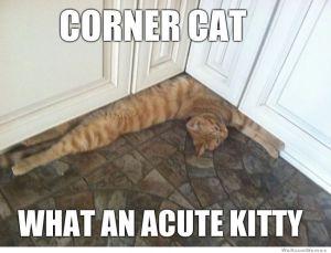 corner-cat-meme