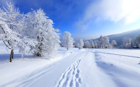 White-Snowfall-Winter-Road-View