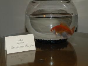 dc-goldfish-gw